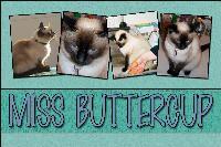 Miss Buttercup