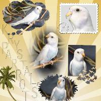 Krystals Parrot 002