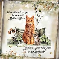 Cat Scan....