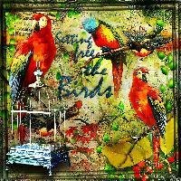 Setting Free the Birds