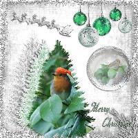 Christmas Tree Robin