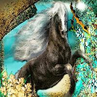 Black horse fantasy
