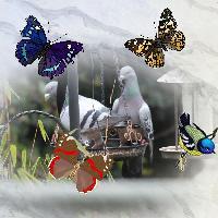 001 Birds and butterflies