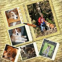 Book of me part 10 ( My pet)
