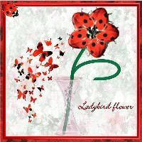 ladybird flower