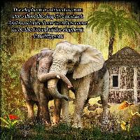 Majestic animals, the Elephant