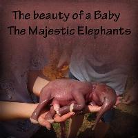 Tiny Baby Elephant