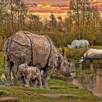 Majestic animals, the rhino