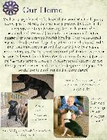 Our Adoption Profile (cont.)