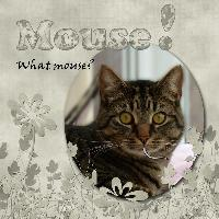 Mouse! What mouse?