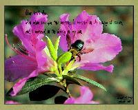 Dear little bee