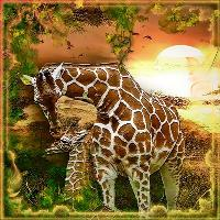 MajesticAnimals...Giraffes 2