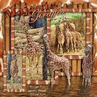Majestic Giraffes 2