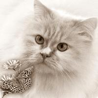 cat , butterfly, sepia