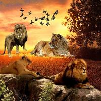 Majestic animals, the Lion