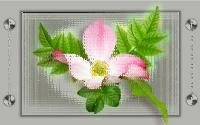 Wallpaper Pink flower.....