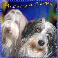 MR-DARCY & OLIVER