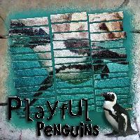 Split Pic - Penguins