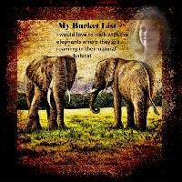 Bucket list Elephants