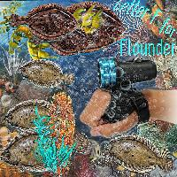 Sea Creatures Letter F...