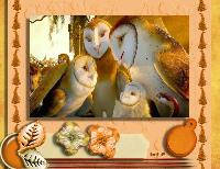 Barn Owls-A family