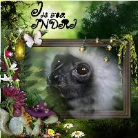 I is for Indri