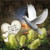 A white dove for peace...