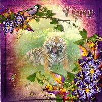 Tiger tiger!!
