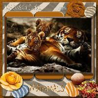 My Sweet Cubs.. Mammals