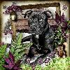 Our Dog Beau..........