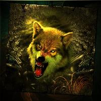 A wolf`s Warning !