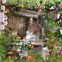 Kitty's Garden