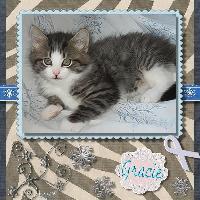 Name that kitty-Gracie