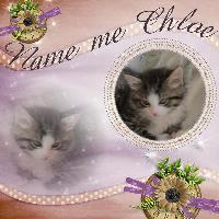 Name Me Chloe