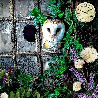 Owl through a broken window...