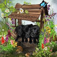 Honey's Puppies