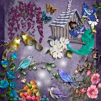 A Bird Paradise