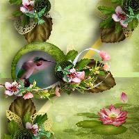 Hummingbird_CT Page