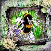 Macro-Bumble Bee
