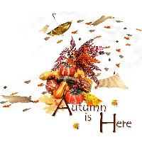 Autumn -Ziggy