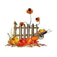 Autumn ziggy 1