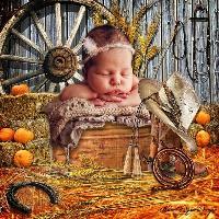 Barn yard Baby
