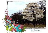 It's Spring in Brazil