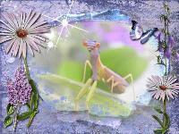 Painted Mantis