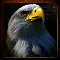 An Eagle`s face