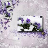 Violets In the Snow