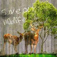 Save our Wildlife
