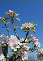 Simply Springtime