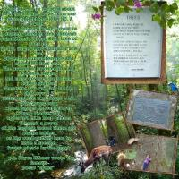 Joyce Kilmer Memorial Forest~