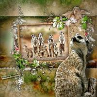 Amazing Meerkats